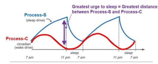 Two-process-model-sleep-circadian-homestatic-sleep-drive